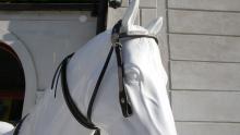 pro koně